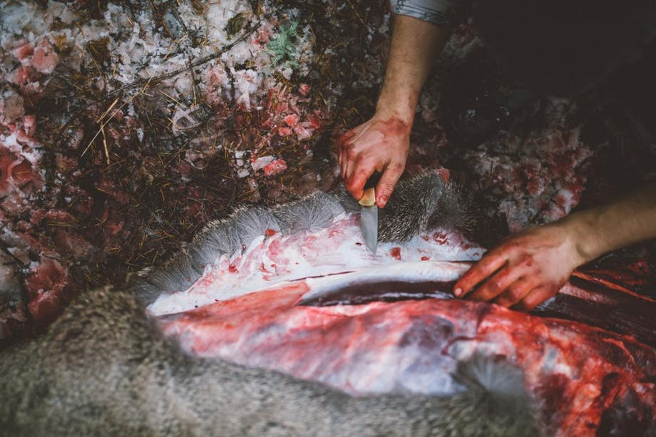 blood covered hands hold knife butchering an animal and removing skin