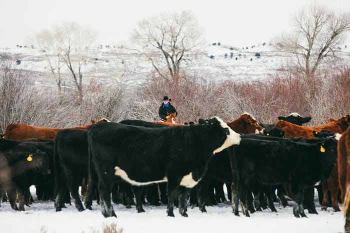 Filson Life - Wyoming Cowboy in snowy field atop horse, surveying his herd of cows