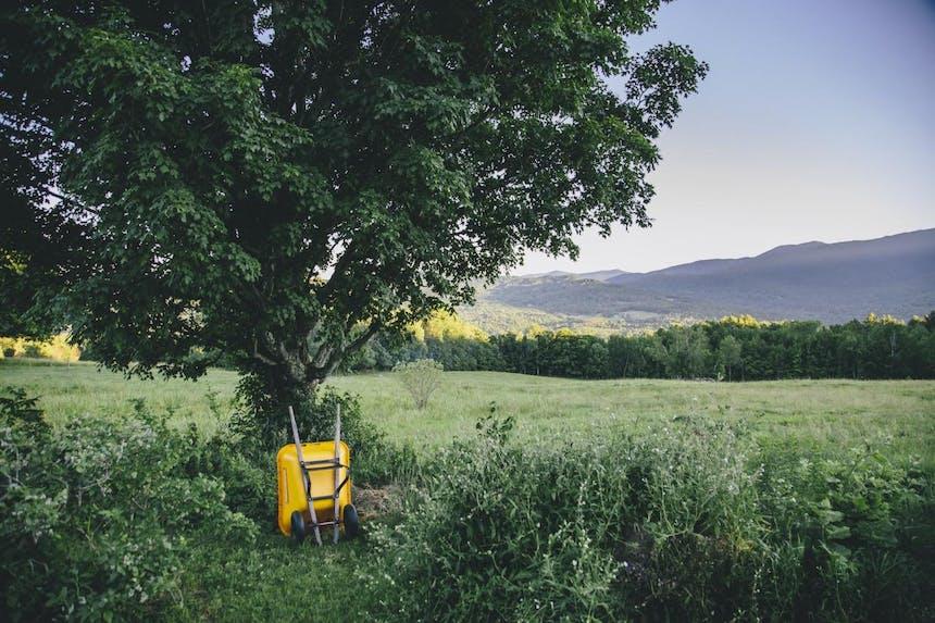 yellow wheelbarrow leadning against tree in open green meadow at Bragg farm
