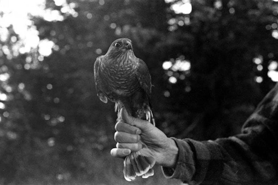 hand holding hawk