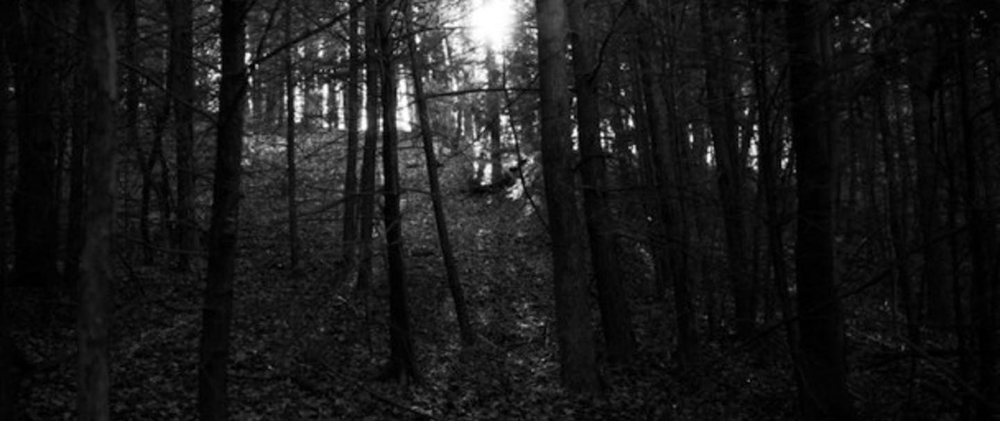black and white image of silhouettes of trees
