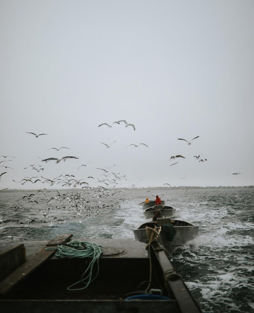 seagulls above the fishing boats