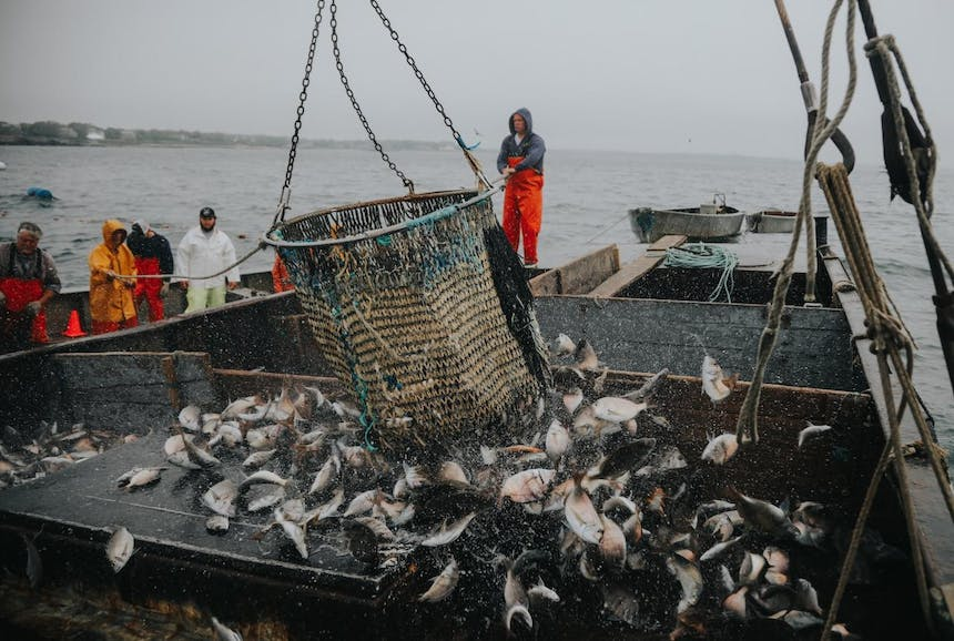 sorting fish on deck of boat