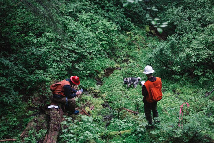 two men in orange vests and hardhats and a black dog survey lush green forest