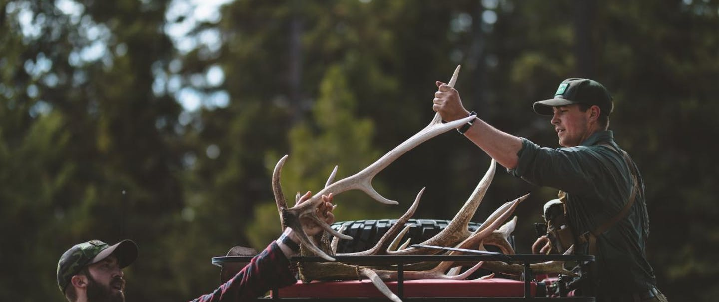 two men are loading elk antlers into a truck
