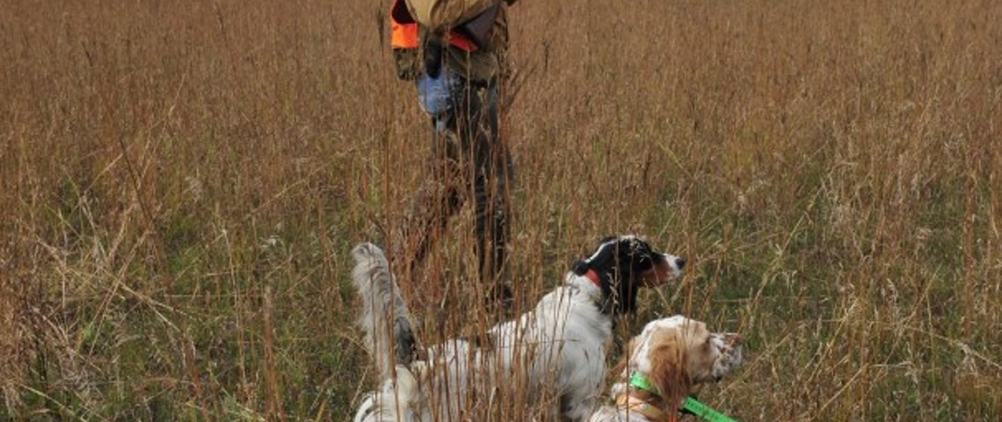 hunter with shotgun stands in field with two hunting dogs