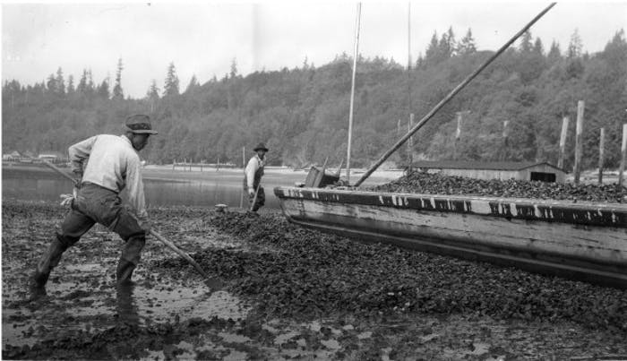 men working with long oyster rakes on rocky beach at water's edge next to wooden boat bough
