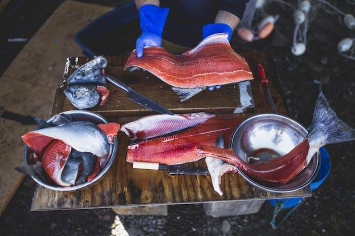 salmon filets on prep table
