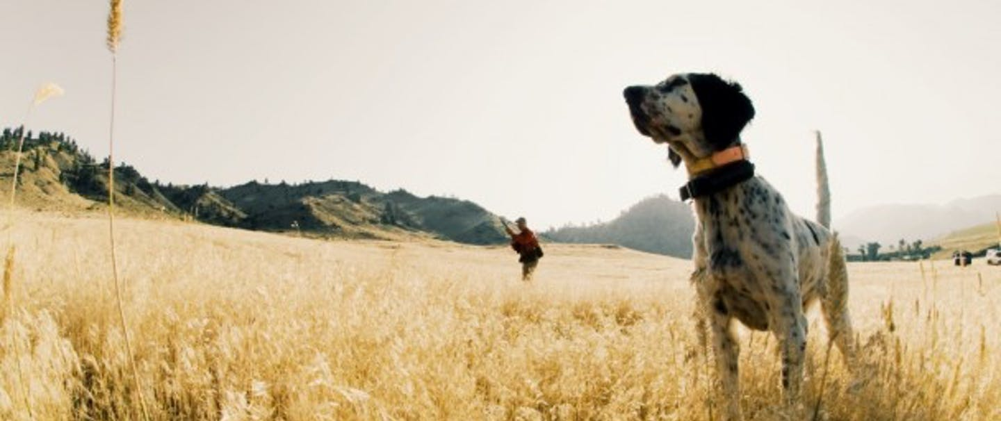 bird dog and hunter stand in a field of short yellow grasses