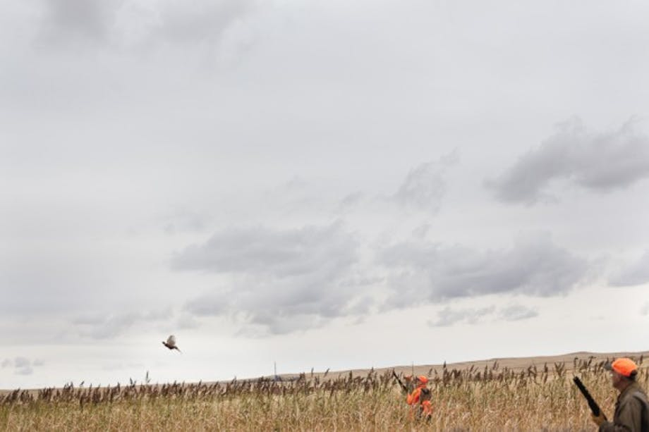 hunters in marshland aim at flying pheasant