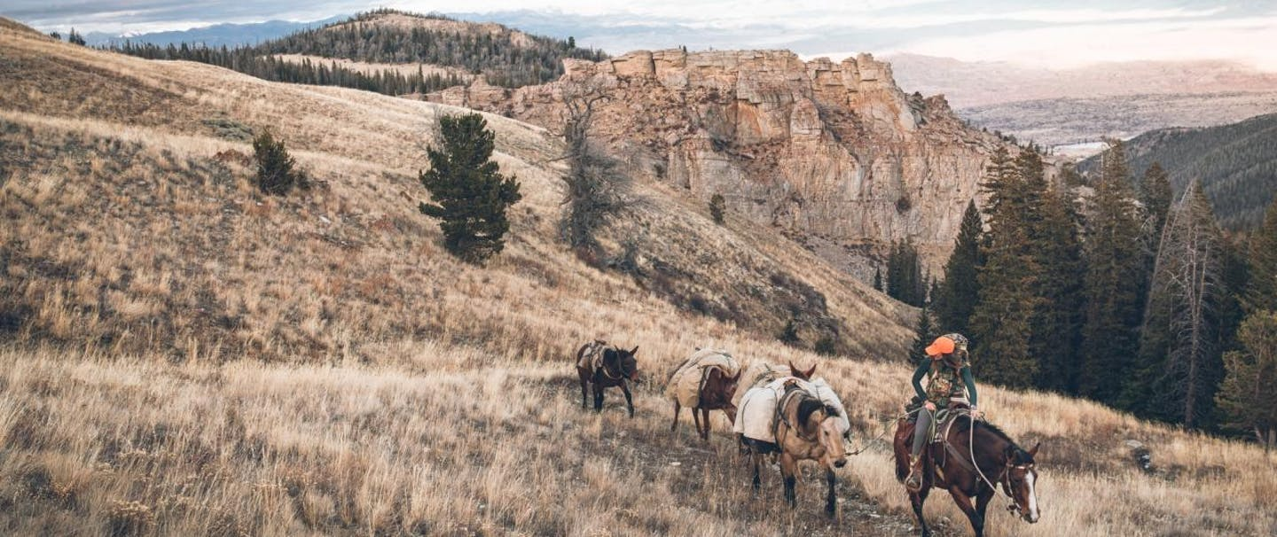 Jessie leading the horse string in grassland with pine trees and red rock hoodoos