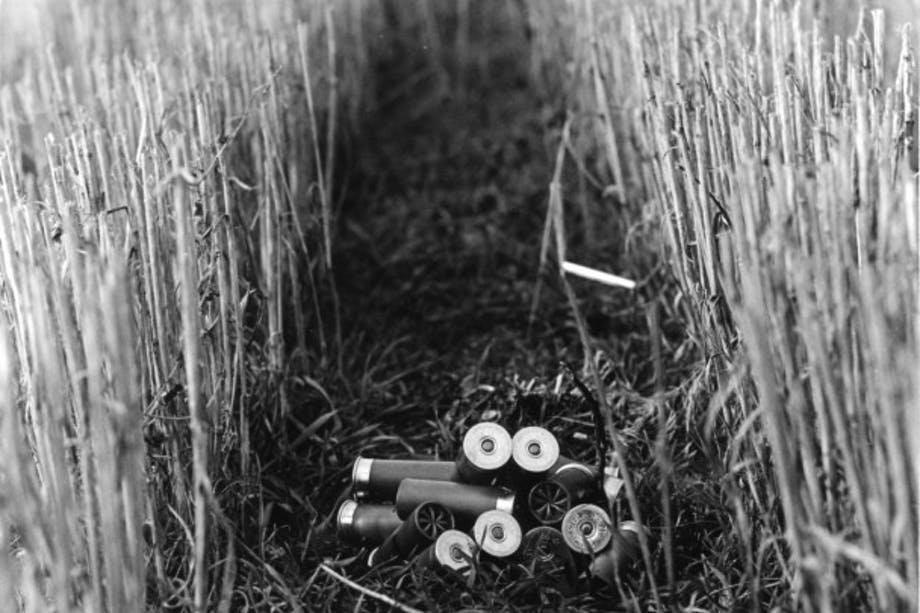 shotgun shells on ground between two lines of reeds