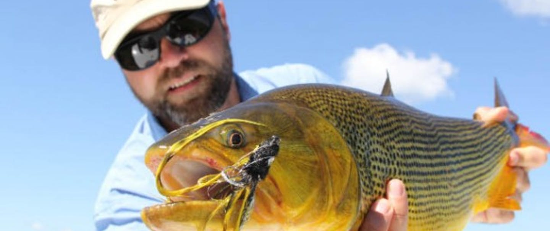 fisherman holding golden-dorado