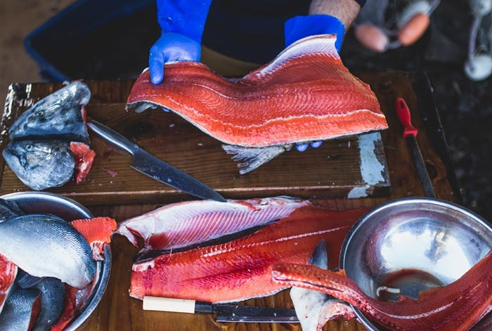 susie jenkins brito salmon parts and two filets held by blue gloved hands on top of butchering station