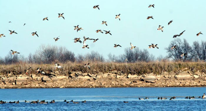 waterfowl swim and fly above a lake