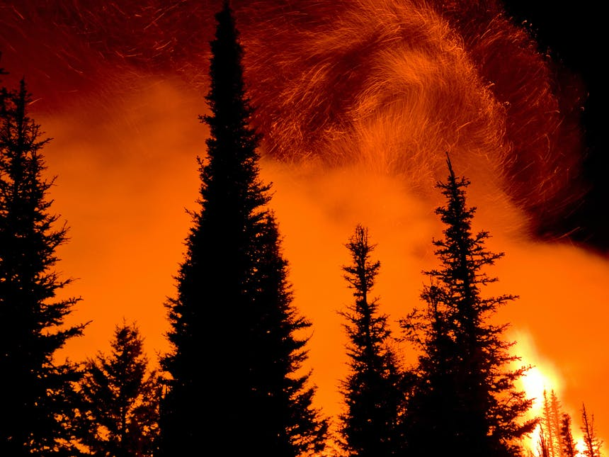 wildfire ablaze behind silhouetted pine trees