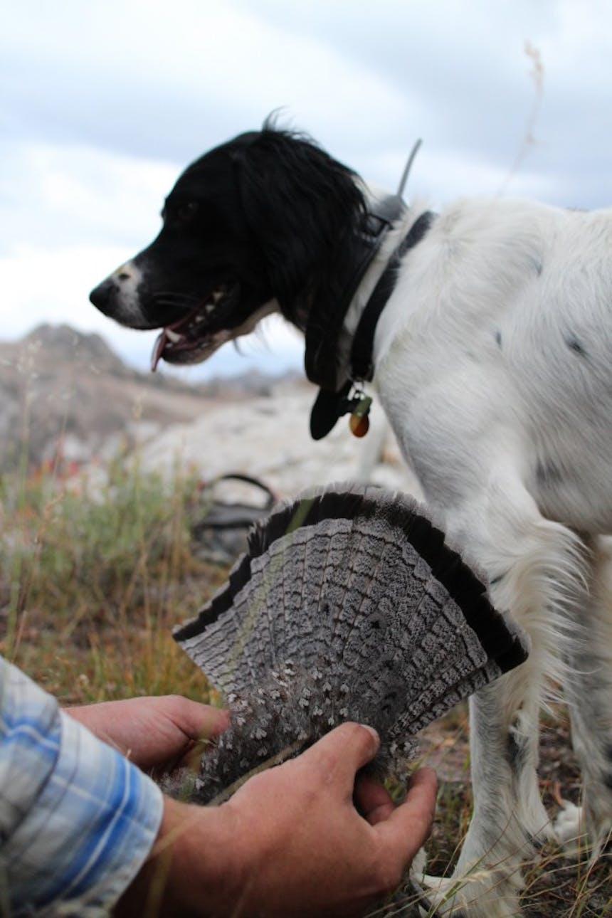 dog standing next to hunter holding dead bird
