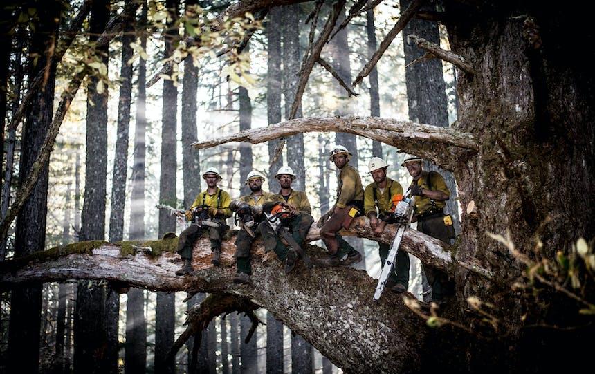 firefighters standing in huge tree