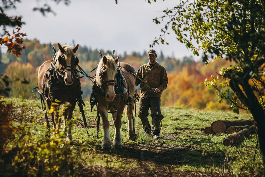 man guiding horses into woods