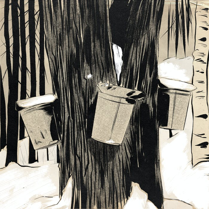 illustration of maple syrup buckets hanging on tree