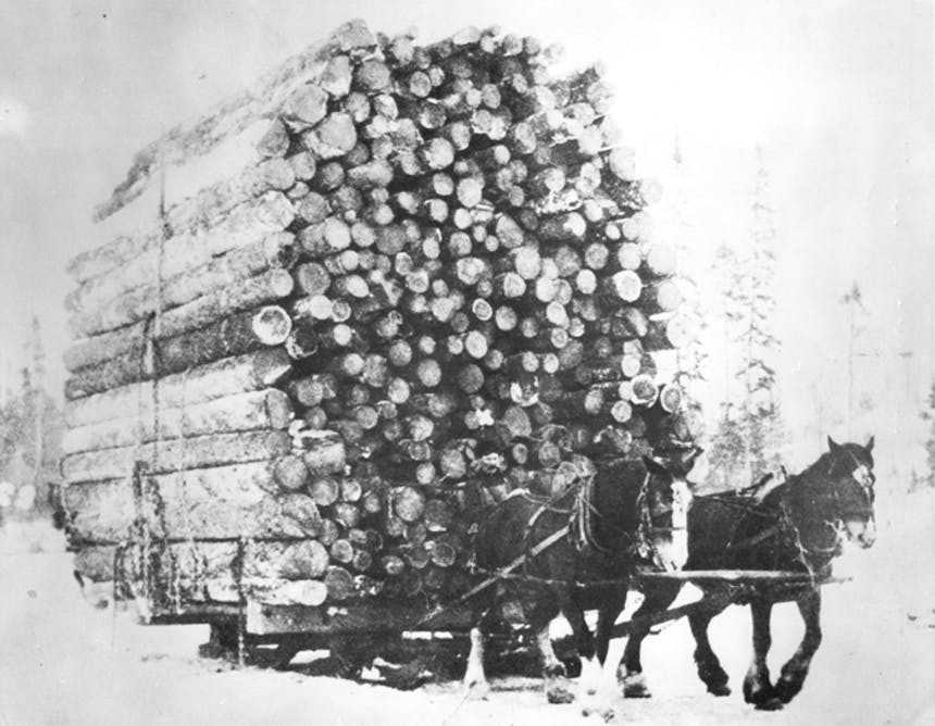 horses pulling a large load of logs on a sleigh