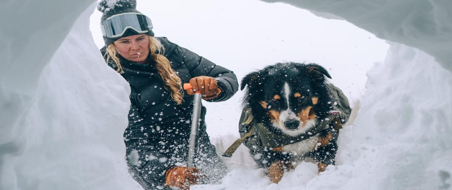 a blonde women wearing a black down jacket, black beanie with black and white ski goggles on her forehead, black snow pants and brown gloves using a silver metal shovel to dig into a snowpack from an avalanche while her black, brown and white dog wearing a pack steps in to rescue the hurt individual