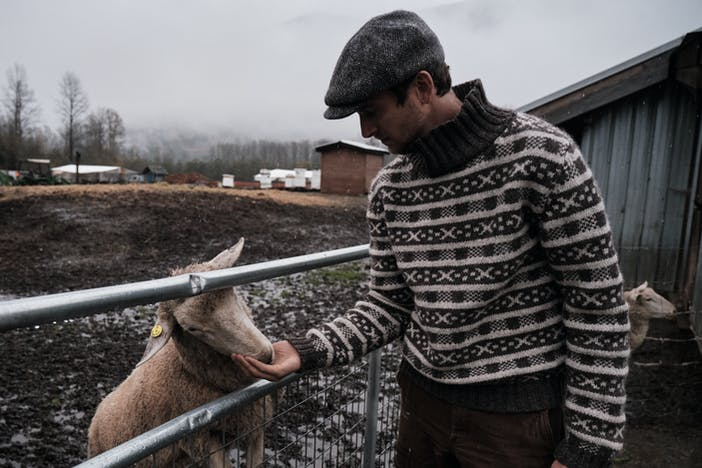 man in brown and white turtleneck sweater and grey cap feeds sheep in pen from his hand