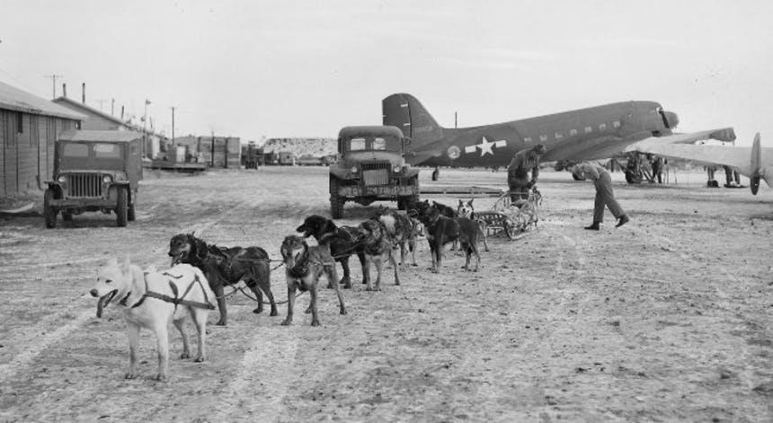 a historic black and white photo of a dozen sled dogs in their harnesses ready to go with two old early 1900 cars and an Air Force plane in the background