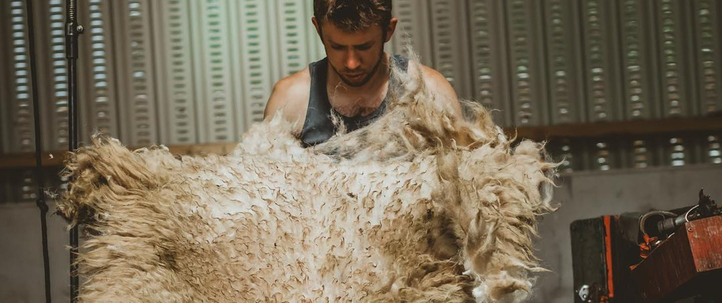 a man holding up a whole sheering in a barn that hangs from his hands at his shoulders to his feet