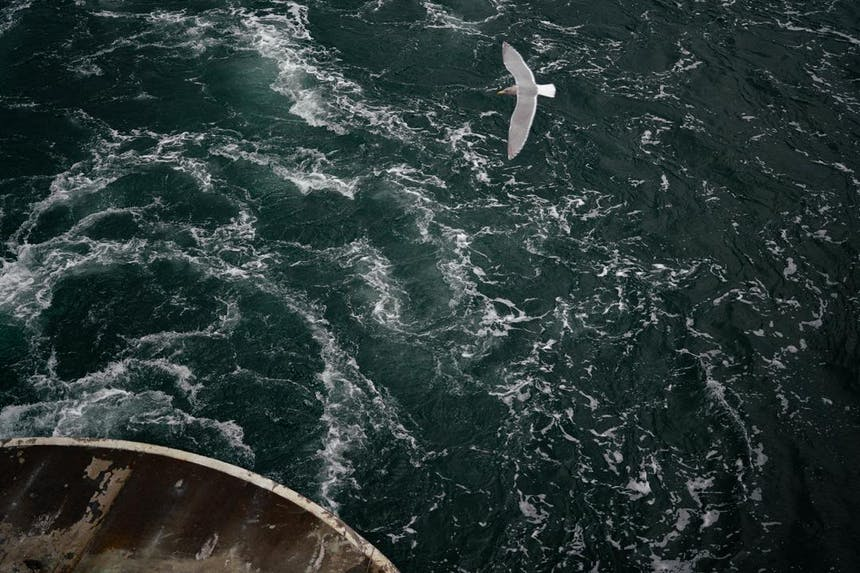a view from the back of the boat desk where a sea gull flies close to the boat