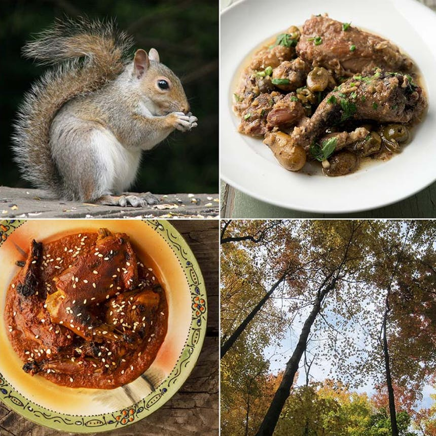 Collage of four images of live squirrel and squirrel prepared two ways