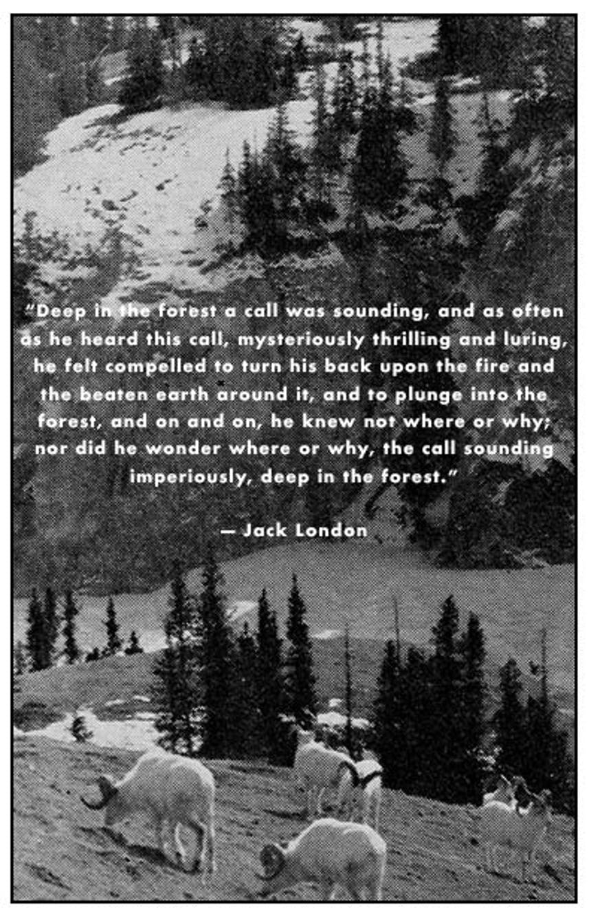 Black and white image of mountain goats on snowy pine lined mountainside with quote from Jack London