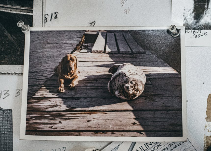 picture of Marian Beck's dog and seal on wooden pier tacked to wall