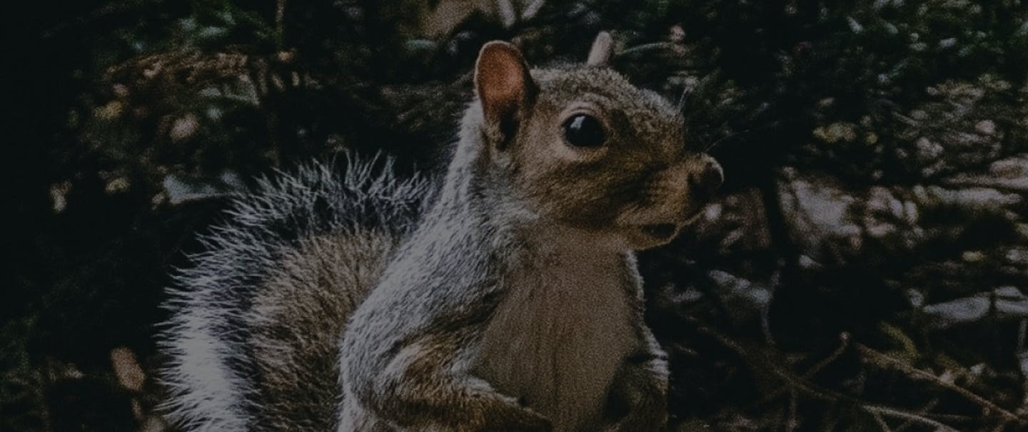 Squirrels Podcast Thumnail