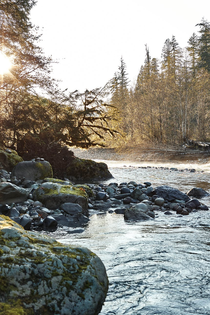 sun shining through pine boughs on the side of a river meandering through piles of river rocks