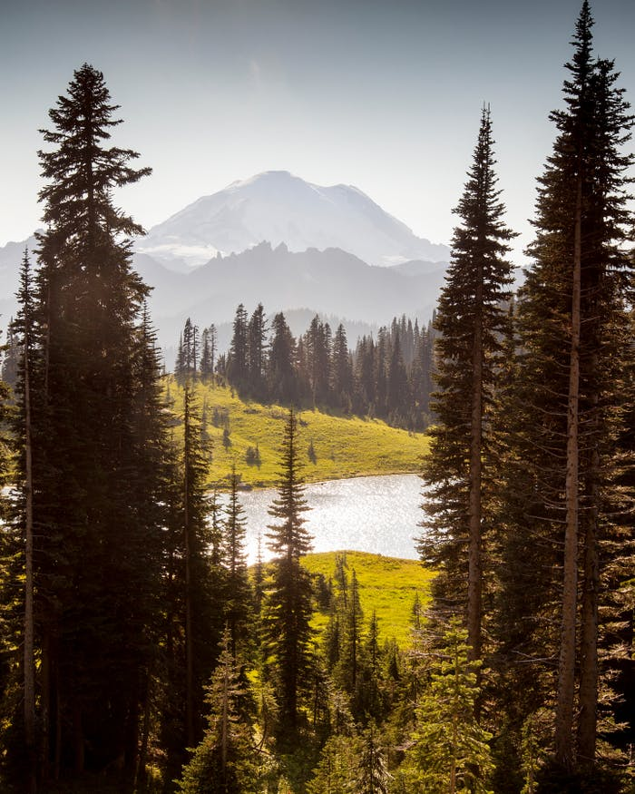 mountain peaks rising away from an alpine lake with towering pines in the foreground