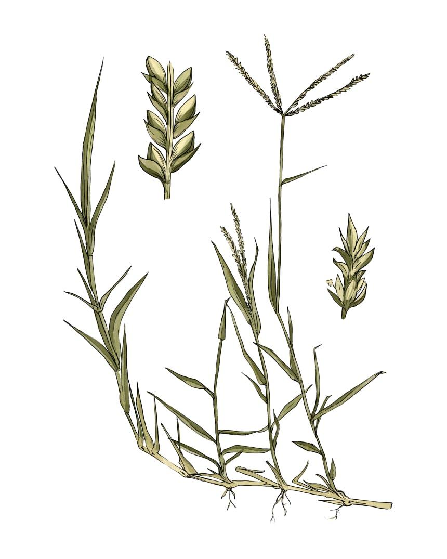 Top 5 Medicinal Plants of the Southwest_2_V2