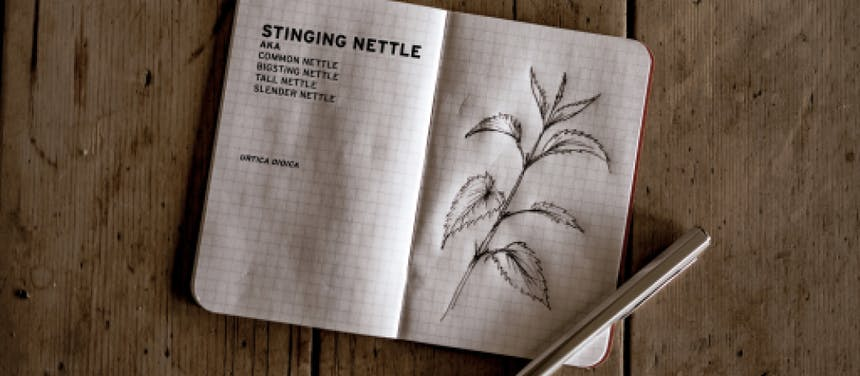 silver pen lying on top of a graph paper lined notebook with image of stinging nettle and writing reading