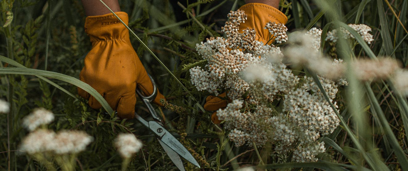 hands in tan leather gloves holding a handful of white flowers in a grassy meadow