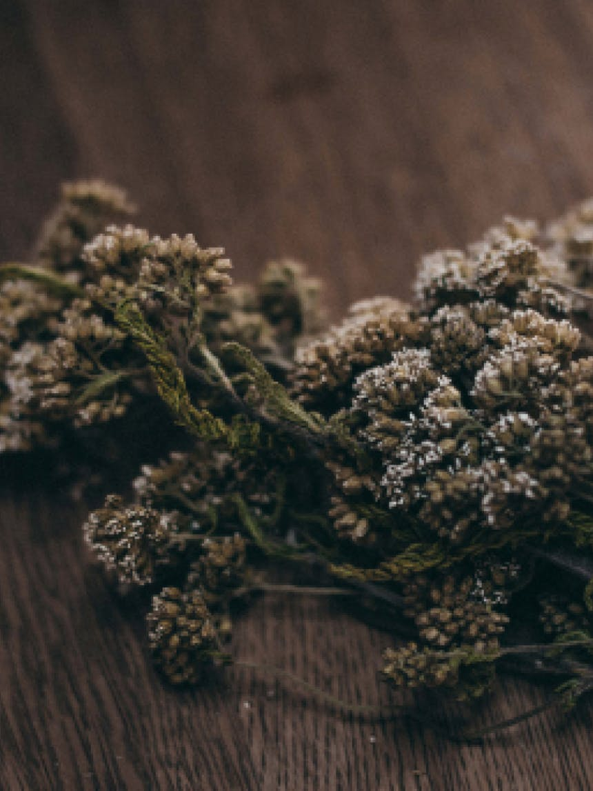 pile of yarrow flowers on a wooden table