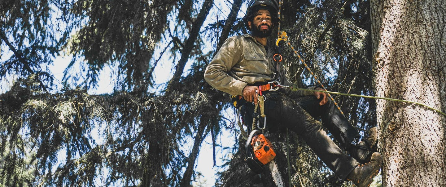 arborist hanging from a rope attached to his harness with a chainsaw attached to a tool belt