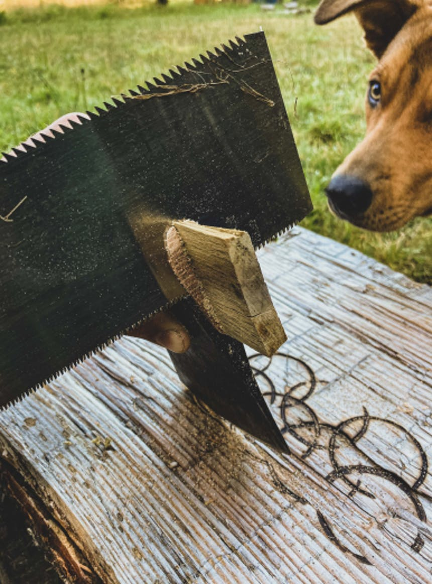 dog watches a saw sawing a piece of wood off of the top portion of an axe handle