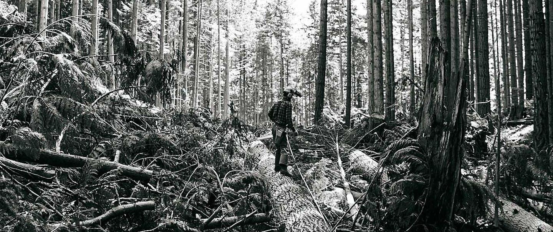 logging12