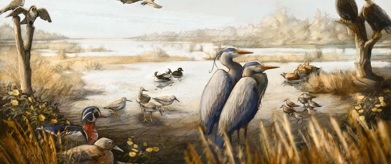 illustration of birds in an estuarine wetland