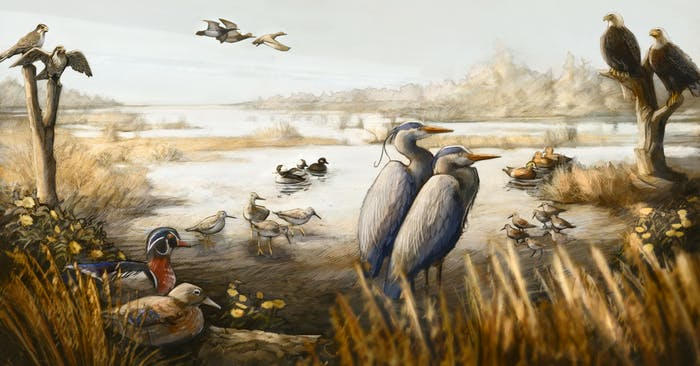 What is an Estuarine Wetland_1200x628