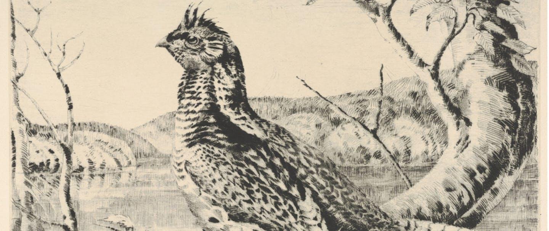 grouse1