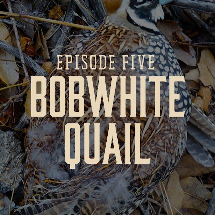 hgt-podcast-quail-cover