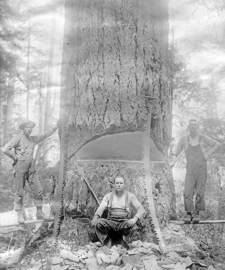 three loggers sitting in front of a huge tree trunk with a chunk cut out of it by two large bow saws
