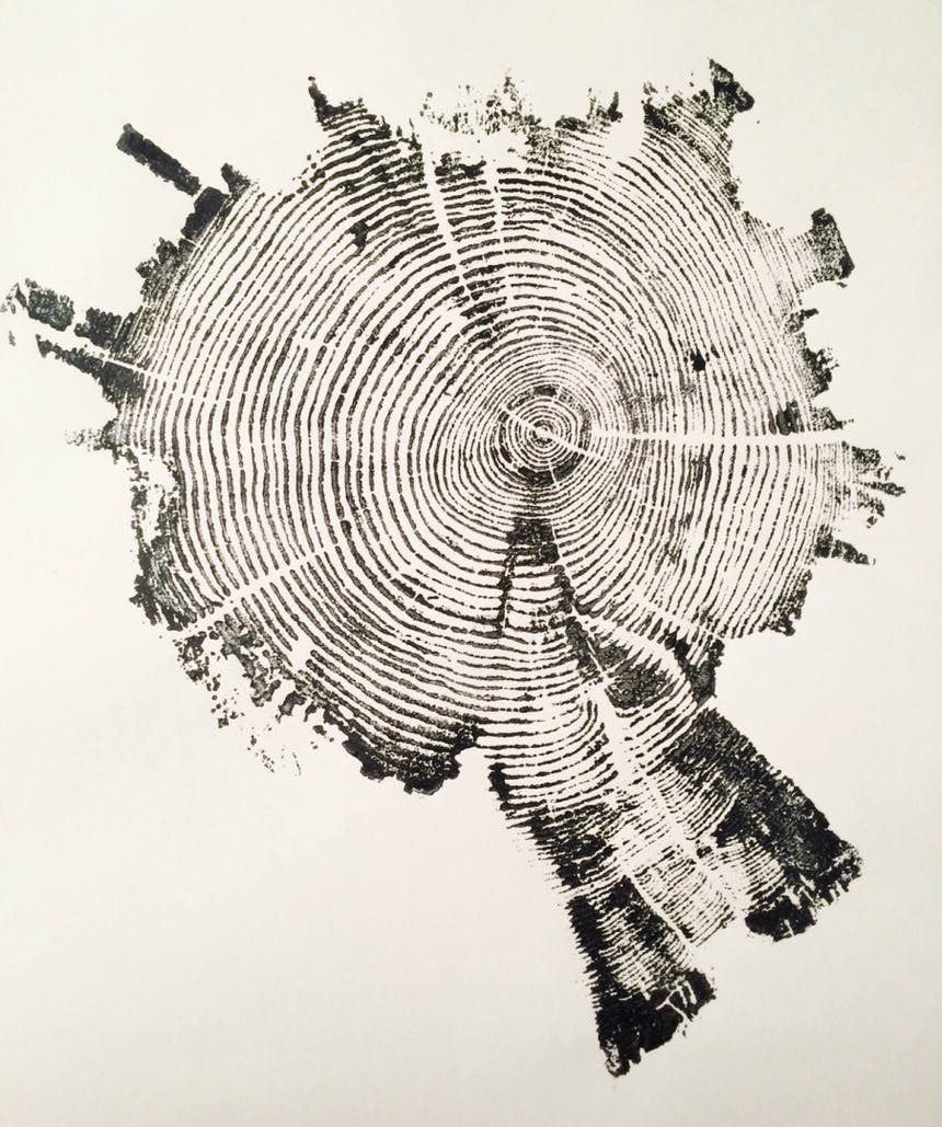 an ink pressing showing the growth circles of a tree