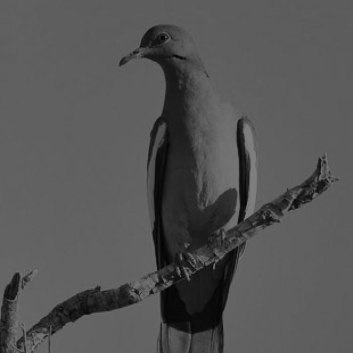 dove-hunting-podcast-feature-image